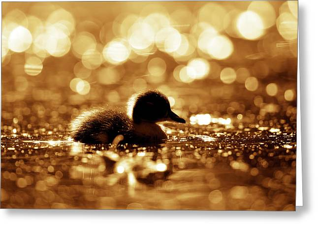 Cute Overload Series - Duckling Reflections Greeting Card