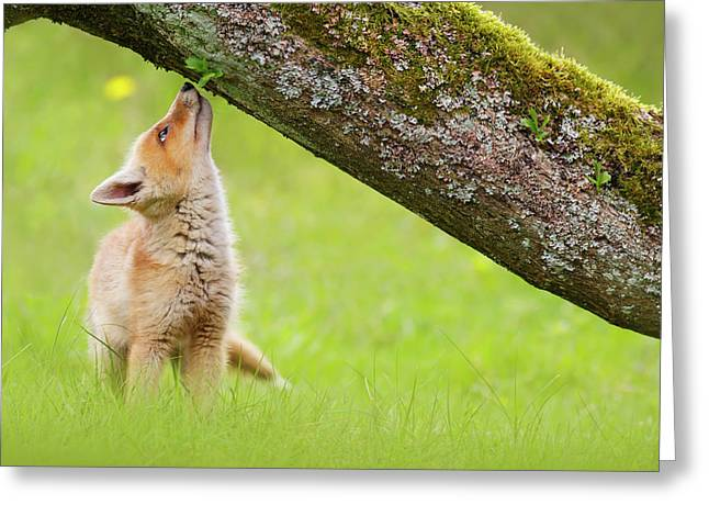Cute Overload Series - Sniffing Fox Kit Greeting Card