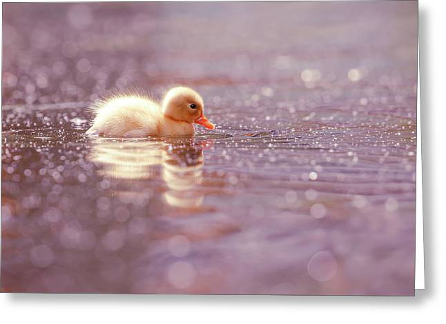 Cute Overload Series - Yellow Duckling Greeting Card