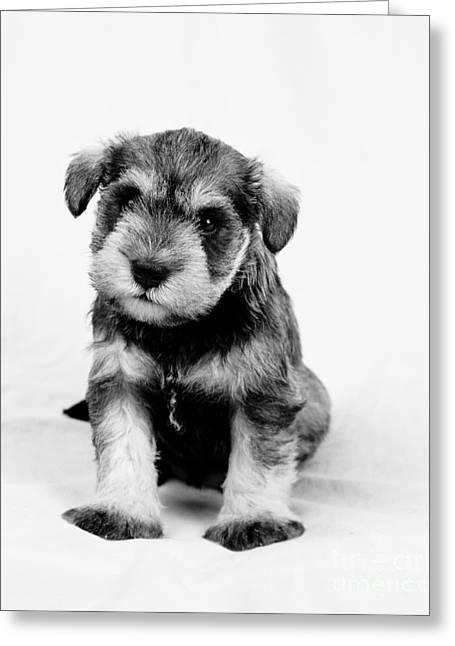 Cute Puppy 1 Greeting Card