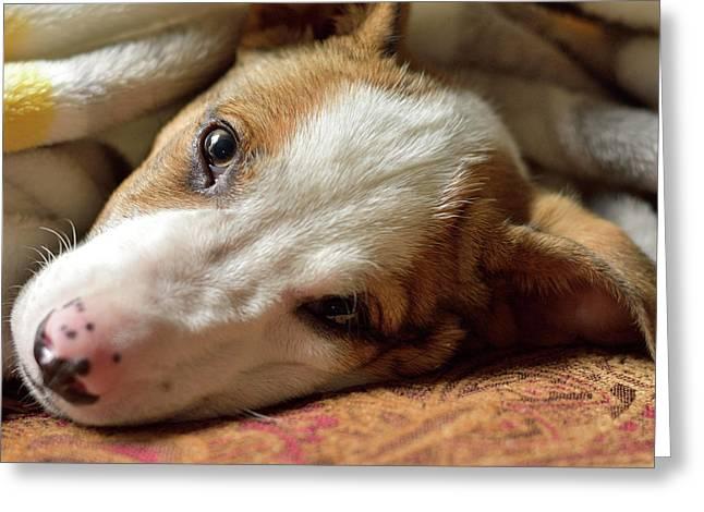 Cute Puppy Cuddles Greeting Card