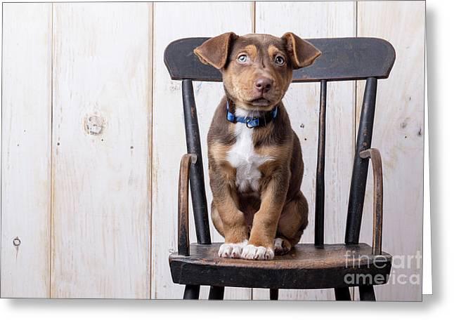 Cute Puppy Dog On A High Chair Greeting Card