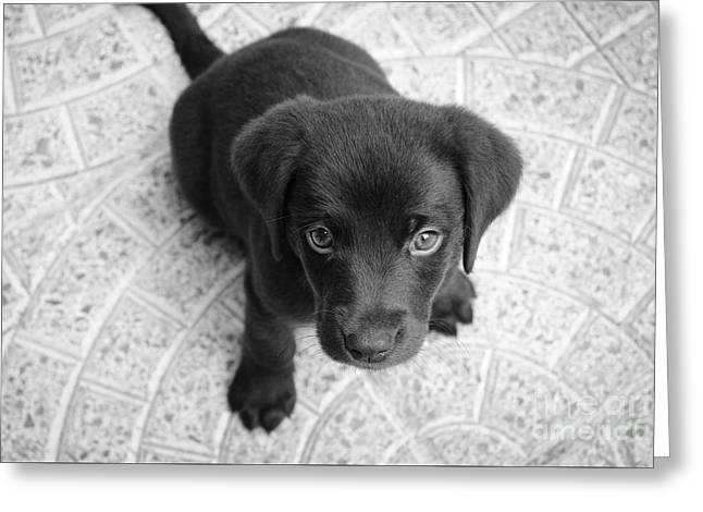 Cute Puppy Dog Greeting Card by Edward Fielding
