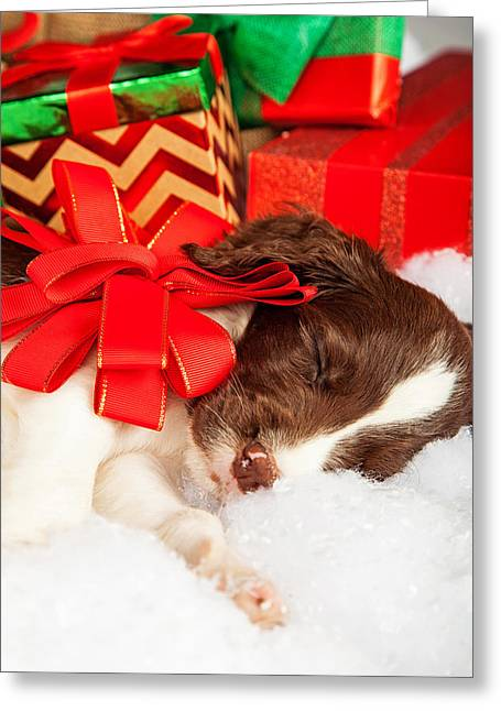 Cute Puppy With Red Bow Sleeping By Gifts Greeting Card by Susan Schmitz