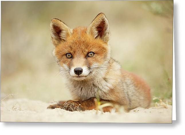 Cute Red Fox In Chill Modus Greeting Card