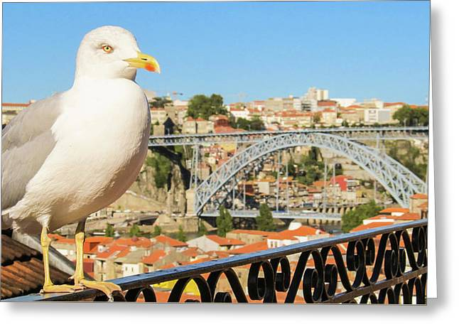 Cute Seagull And Porto's Cityscape Greeting Card