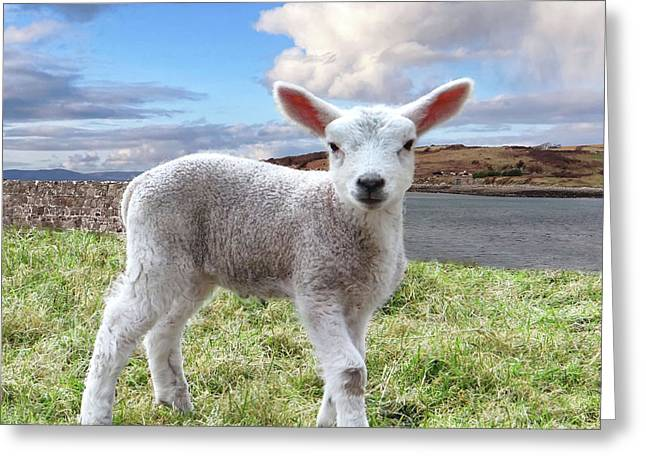 Cute Spring Lamb Posing Beside The Wild Atlantic Way In Ireland Greeting Card