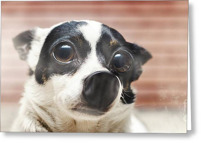 Cute Surprised Dog Pressed Up Against Glass Window Greeting Card by Jorgo Photography - Wall Art Gallery