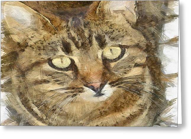 Cute Tabby Looking Up Greeting Card by Tracey Harrington-Simpson