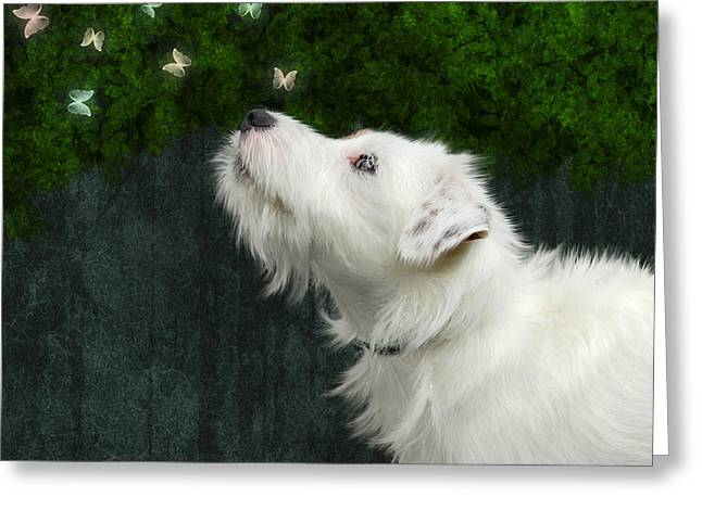 Greeting Card featuring the photograph Cute White Jack Russel Dog by Ethiriel  Photography