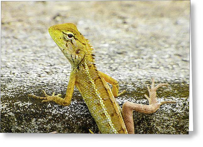 Cute Yellow Lizard Greeting Card
