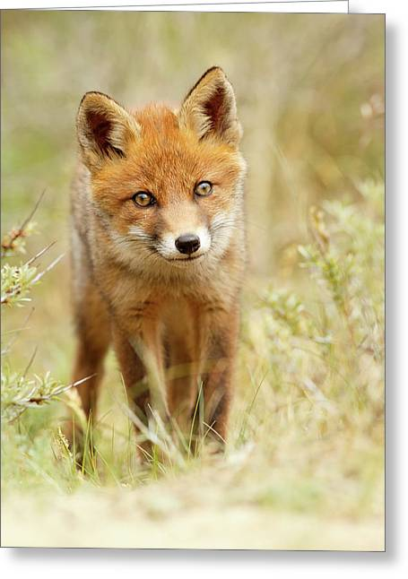 Cute Young Red Fox Cub Greeting Card