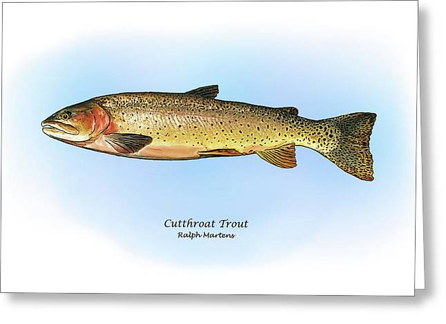 Cutthroat Greeting Cards - Cutthroat Trout Greeting Card by Ralph Martens