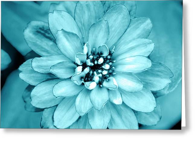Aqua Bloom Greeting Card by Sean Davey