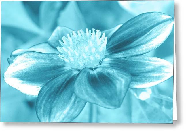 Aqua Flower Greeting Card by Sean Davey