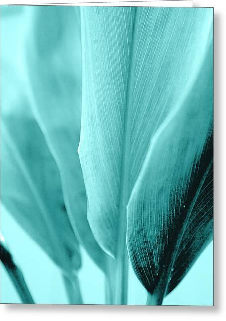 Aqua Leaf Bases Greeting Card by Sean Davey