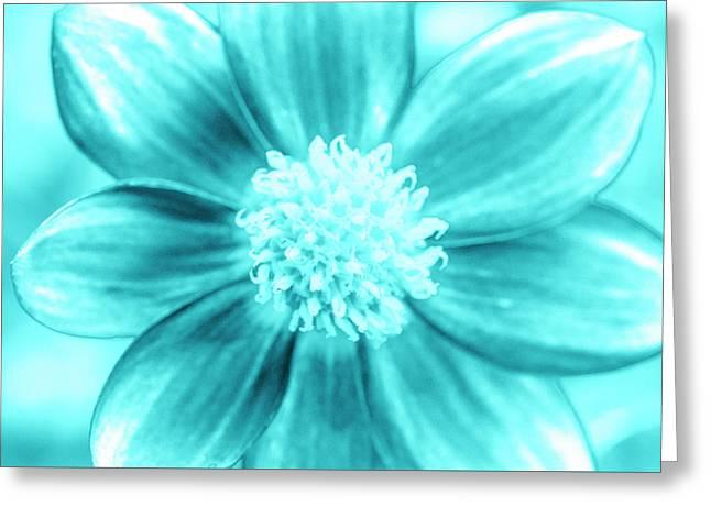Aqua Petal Face Greeting Card by Sean Davey