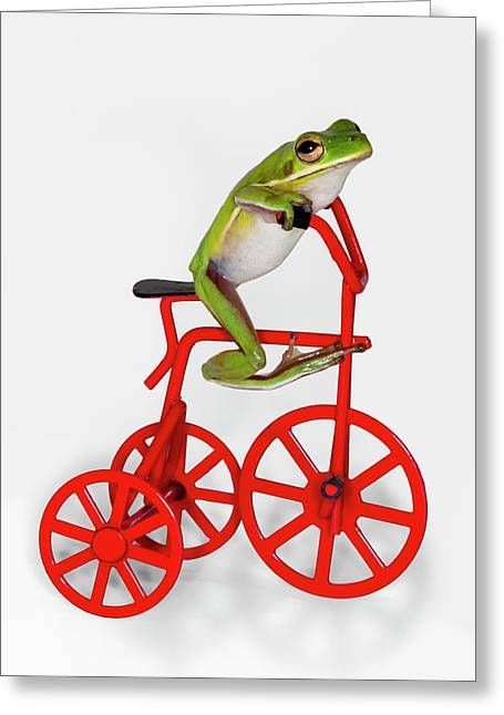 Tree Frog Greeting Cards - Cycle Envy Greeting Card by Janet Fikar