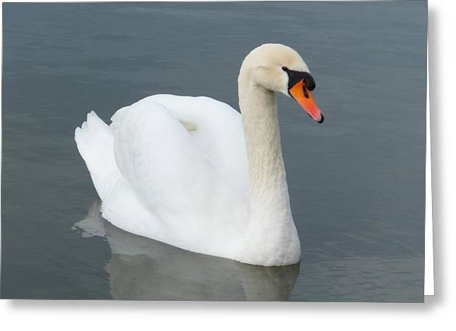 Cygne Greeting Card by Marc Philippe Joly