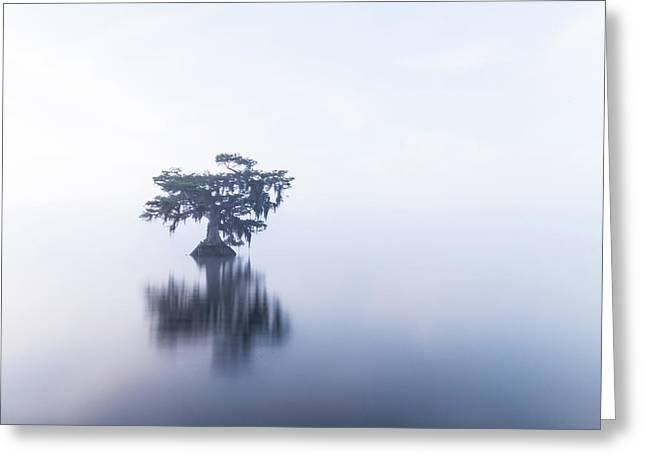 Cypress In Heavy Fog Greeting Card