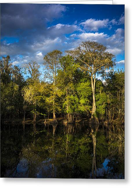 Cypress And Oaks Greeting Card by Marvin Spates