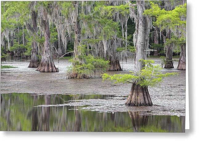 Cypress And Spanish Moss Of Caddo Lake State Park 4 Greeting Card by Rob Greebon