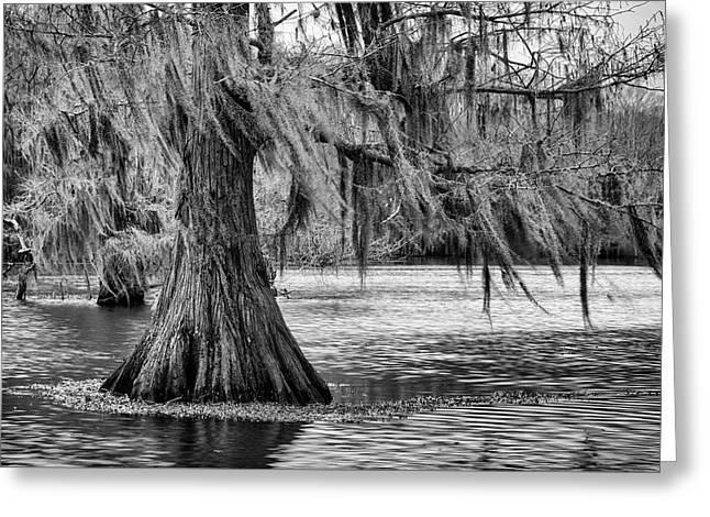 Cypress At Caddo Lake Greeting Card by Mary Lee Dereske