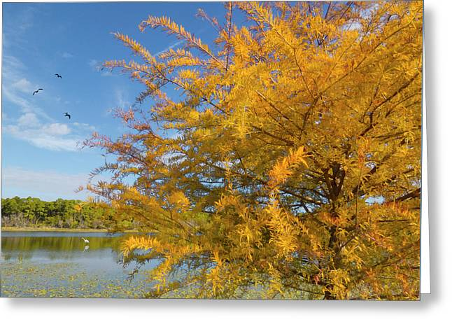 Cypress At Ollie's Pond - Port Charlotte, Florida Greeting Card