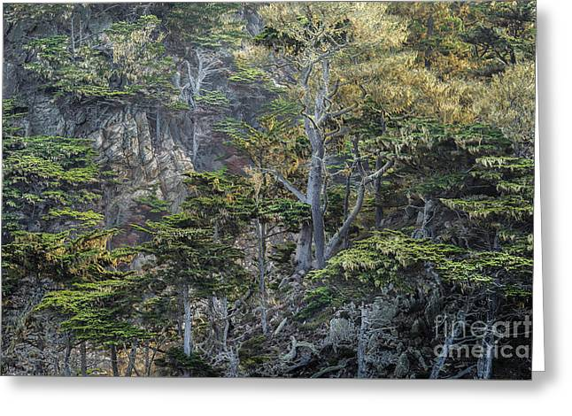 Cypress Cliffs Greeting Card by Alexander Kunz
