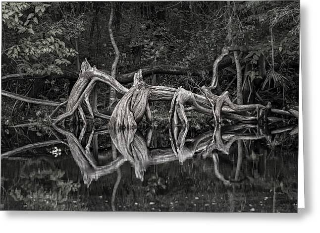 Greeting Card featuring the photograph Cypress Design by Steven Sparks