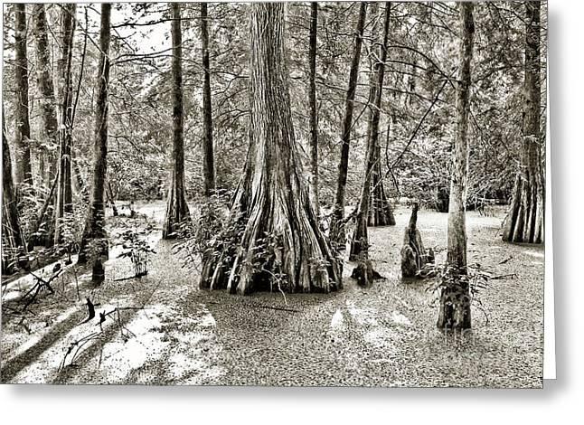Cypress Evening Greeting Card by Scott Pellegrin