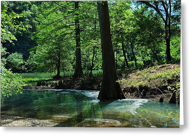 Cypress Forest In Summer Greeting Card by Iris Greenwell