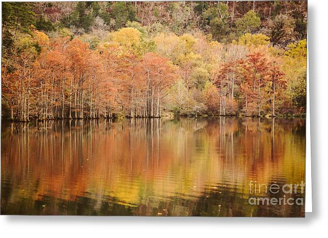 Cypress Forest In The River Greeting Card by Iris Greenwell