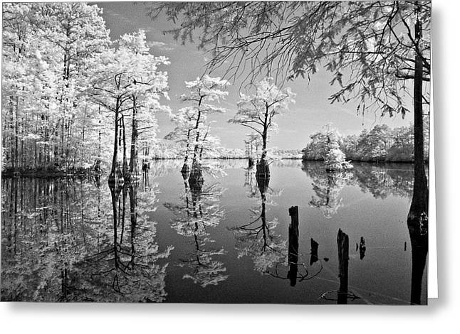 Cypress In Walkers Mill Pond Greeting Card