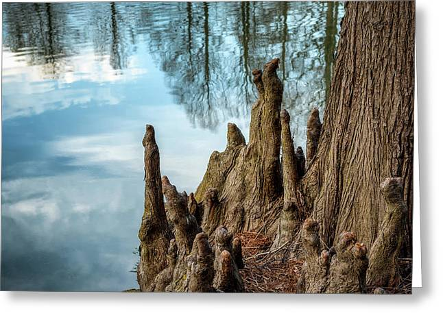 Greeting Card featuring the photograph Cypress Knees by James Barber
