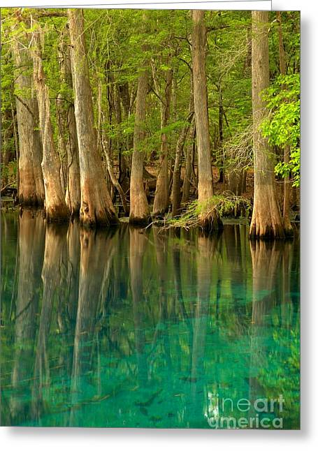 Cypress Reflections In Blue Greeting Card by Adam Jewell