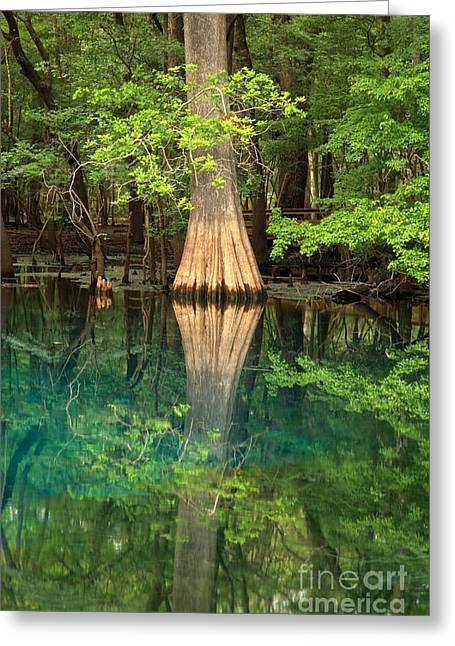 Cypress Reflections In Manatee Spring Waters Greeting Card by Adam Jewell