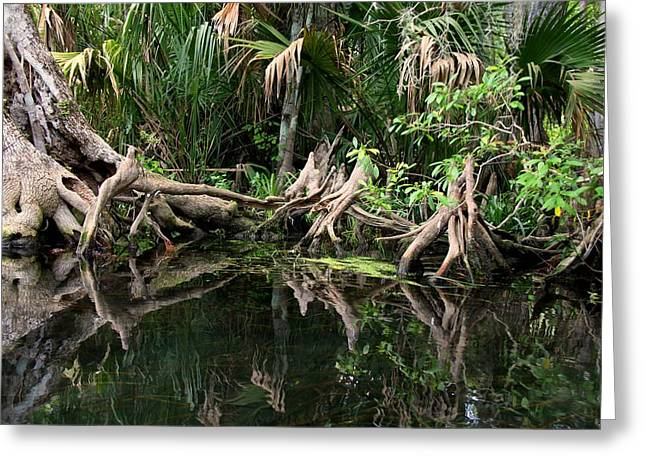 Greeting Card featuring the photograph Cypress Swamp  by Barbara Bowen
