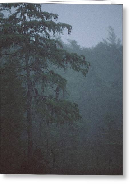 Cypress Swamp Greeting Card by Kimberly Mohlenhoff