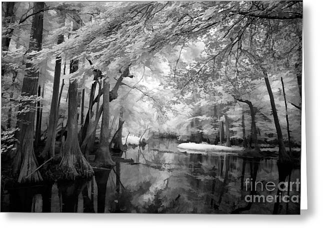 Cypress Swampland Greeting Card