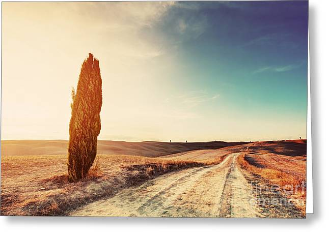 Cypress Tree And Field Road In Tuscany Greeting Card by Michal Bednarek