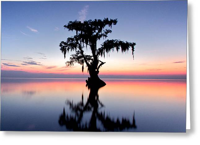Greeting Card featuring the photograph Cypress Tree by Evgeny Vasenev