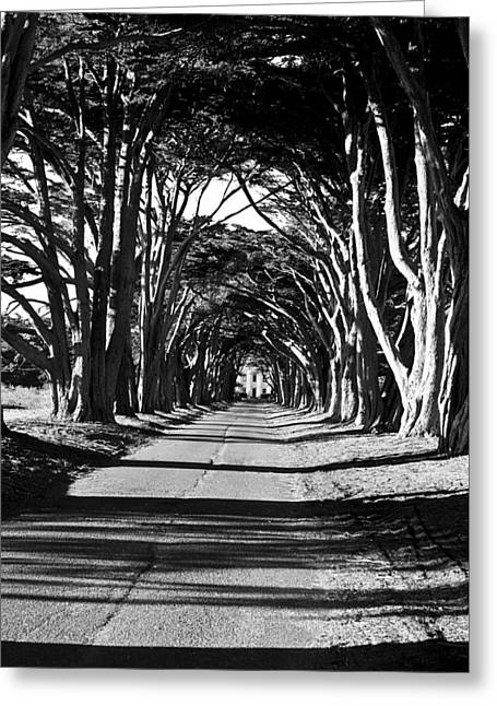 Cypress Tree Tunnel Greeting Card