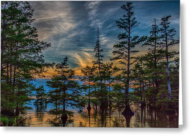 Cypress Trees At Sunset Greeting Card by Paul Freidlund