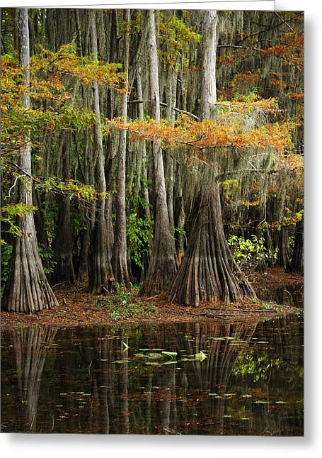 Cypress Trees Forest Greeting Card by Iris Greenwell