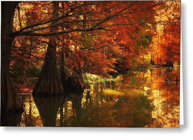 Cypress Trees In The Misy Morning Greeting Card by Iris Greenwell