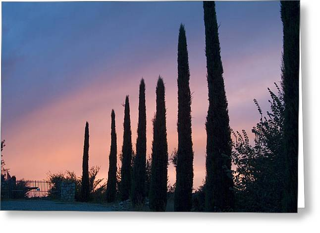 Cypress Trees Line The Driveway Greeting Card