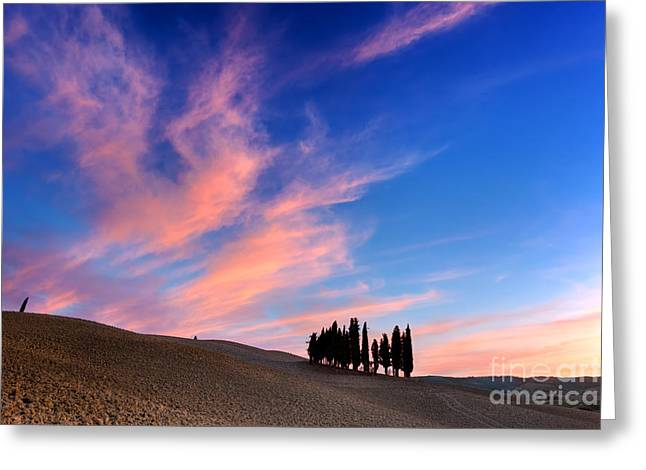 Cypress Trees On The Field In Tuscany, Italy At Sunset Greeting Card