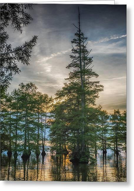 Cypress Trees Greeting Card by Paul Freidlund