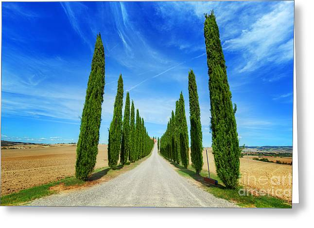 Cypress Trees Road In Tuscany, Italy Greeting Card